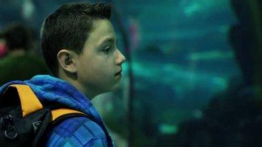 Boy watching shark in aquarium — Stock Video