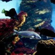 Stok video: Fish swimming in aquarium