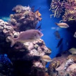 Stock Video: Fish in Barcelona oceanarium