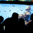 People watching fish in Aquarium — Stok video