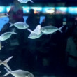 People watching fish in Aquarium — Wideo stockowe