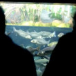 People watching fish in Aquarium — Vídeo Stock