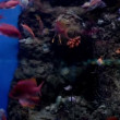 Stock Video: Fish in Barcelona Aquarium