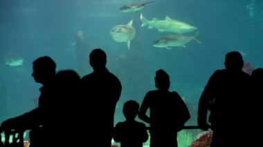 People watching shark aquarium — Stock Video