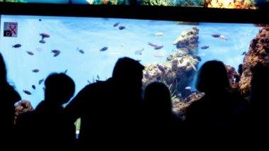 люди, смотрящие рыбу в аквариуме — Стоковое видео