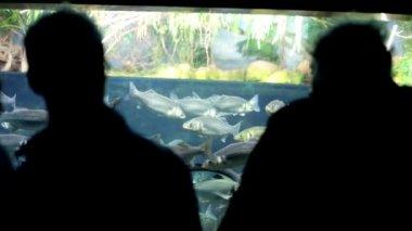 People watching fish in Aquarium — Stockvideo
