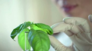 Biologist examine plant in test tube — 图库视频影像