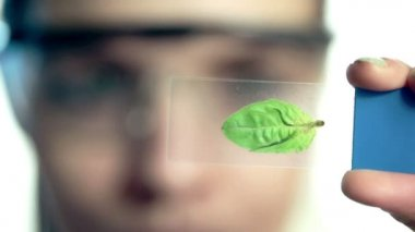 Scientist looking at plant leaf in glass slide — 图库视频影像