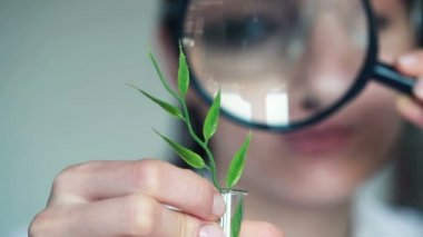 Biochemist examine plant — Stock Video