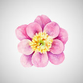 Watercolor Peony isolated on white. — Stock Vector