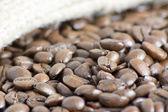 Macro de grãos de café — Fotografia Stock