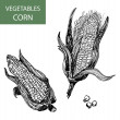 Corn-set of vector illustration — Stock Vector