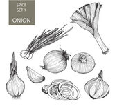 Onion. Set of illustrations — Stock Vector