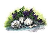 Garlic and herb — Stock Photo