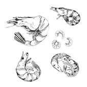 Seafood. Shrimps. — Stock Vector