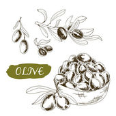 Olive. Set of illustrations — ストックベクタ