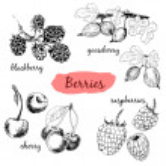 Berries. Set of illustrations — Stock Vector #41586539