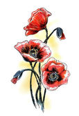 Poppies. Watercolor summer flowers — Stock Photo
