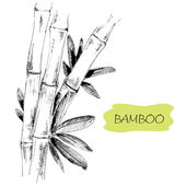 Bamboo — Stock Vector