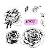 Roses. Set of illustrations — Stock Vector