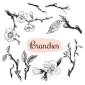 Branches — Stock Vector