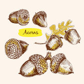 Acorns illustrations — Vector de stock