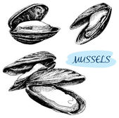 Mussels illustrations. — Stock Vector