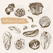 Collection of salads — Vector de stock