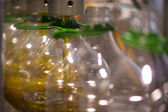 Olive oil factory, Olive Production — Foto Stock