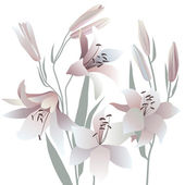 White lilies — Vector de stock