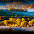 Golden aspens in mist valley — Stock Photo