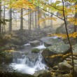 Autumn stream in the forest in misty day  — Stok fotoğraf