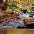 Stock Photo: Autumn stream in forest in sunny day