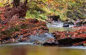 Autumn stream in the forest in sunny day — Stock Photo