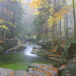 Stock Photo: Autumn stream in forest in misty day