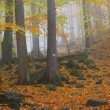 Stock Photo: Autumn forest scene