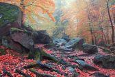 Sonbahar orman sahne — Stok fotoğraf