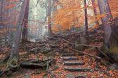 Autumn forest scene — Stock Photo