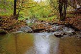 Flux en automne dans la forêt en journée ensoleillée — Photo