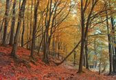 Autumn forest scene — Stock Photo