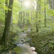 Forest stream — Stock Photo #37751695
