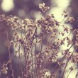 Stock Photo: Flowering meadow