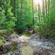 Stock Photo: Forest creek