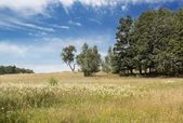 Beautiful landscape with fields and hills — Foto de Stock