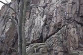Climbing wall — Stock Photo