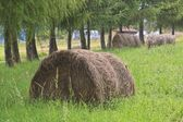 Straw harvest on a field  — Stock Photo