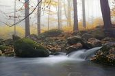 Autumn stream in the forest in misty day  — Zdjęcie stockowe