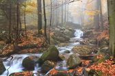 Autumn stream in the forest in misty day  — Photo