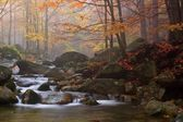 Autumn stream in the forest in misty day  — Stock Photo