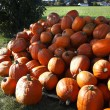 Pumpkins — Stock Photo #37628063